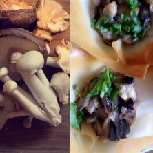 Creamy wild mushrooms in filo pastry